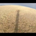 Flying with the Pikes Peak Powered Paragliding Club 11/1/14